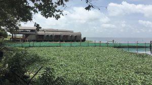Mangroves in Kochi