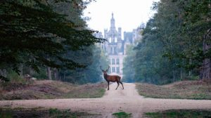 a stag on the pathway to Château de Chambord