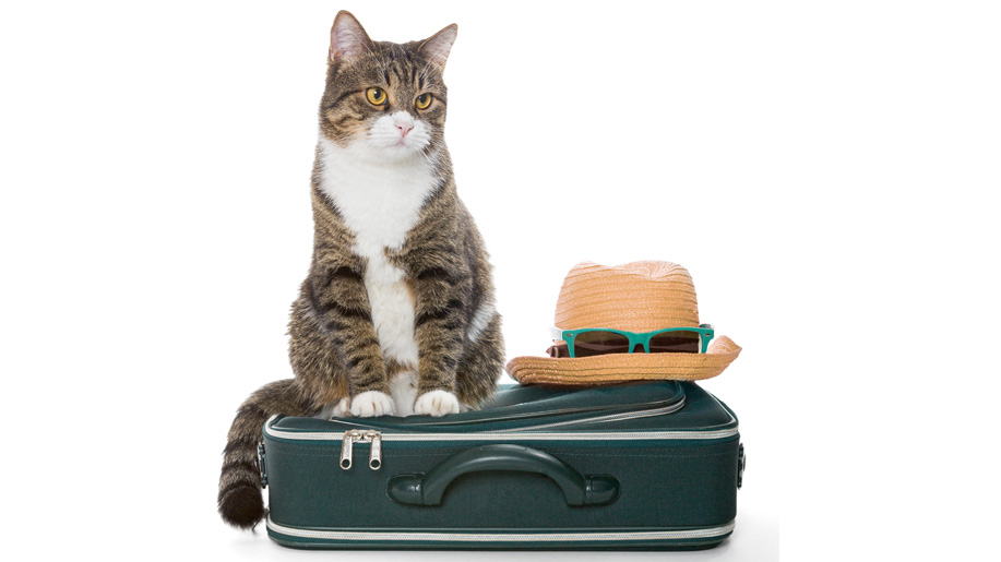 An app to track your pet while flying – Business Traveller
