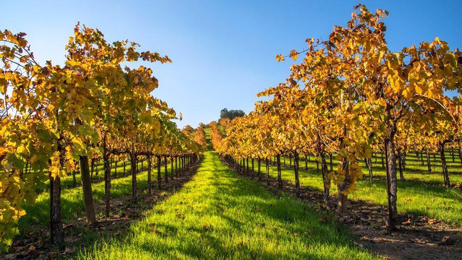 Image result for Vineyard istock